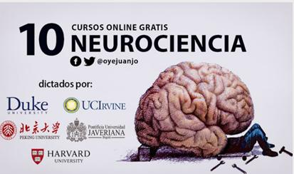 Fundamentos de la Neurociencia, Parte 3: El Cerebro
